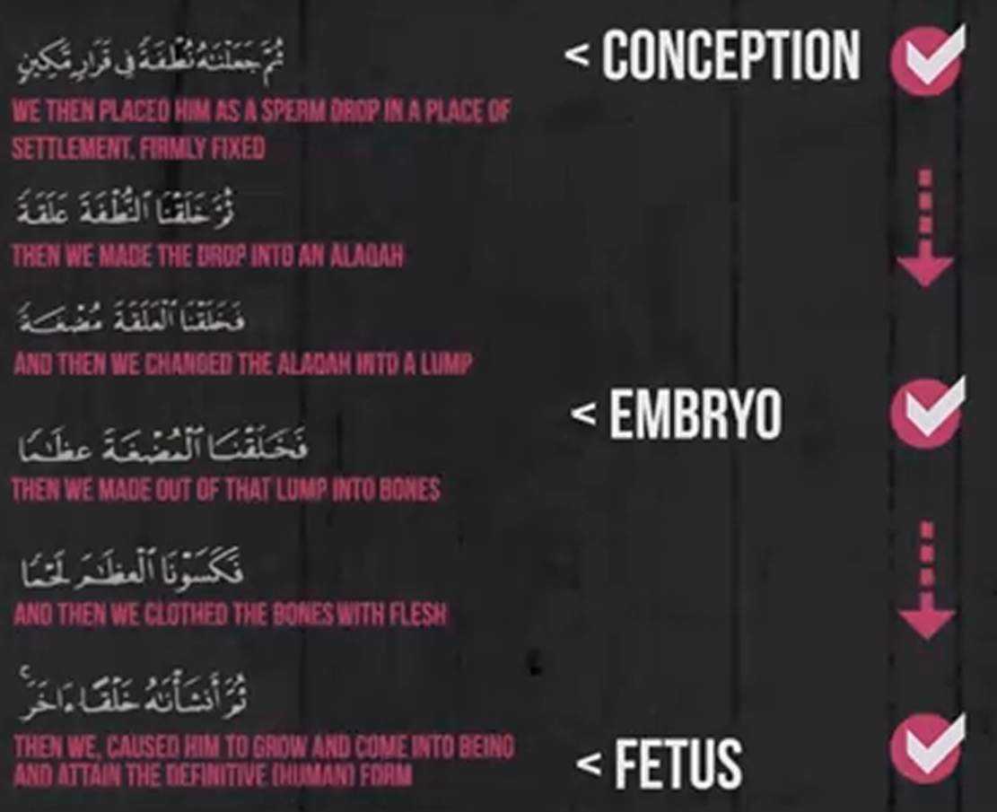 Embryology In The Quran Many Prophets One Message
